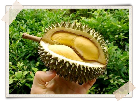 Durian is King of fruits