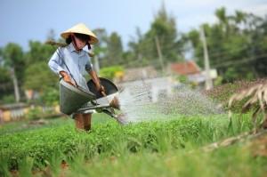 Watering vegetable