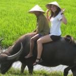 Buffalo Cart Ride to Countryside Tour